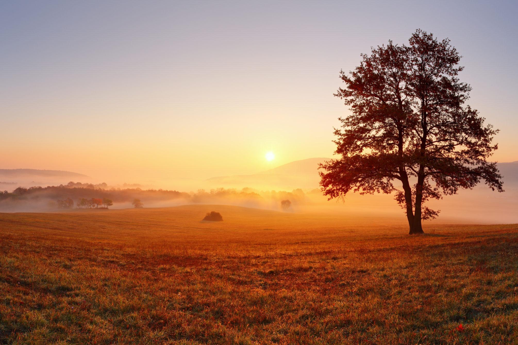 Der Baum auf der herbstlichen, nebelverhangenen Wiese ist beim Sonnenaufgang gleichzeitig ein Symbol für Abschied, wie auch Neubeginn.